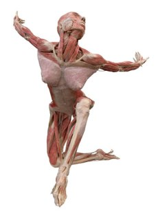body-worlds-by-gunther-von-hagens-2
